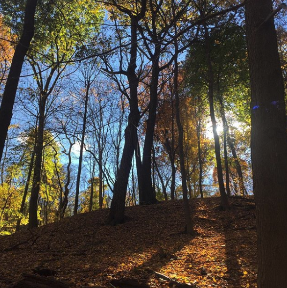 Photo Credit:  Pittsburgh Parks Conservancy