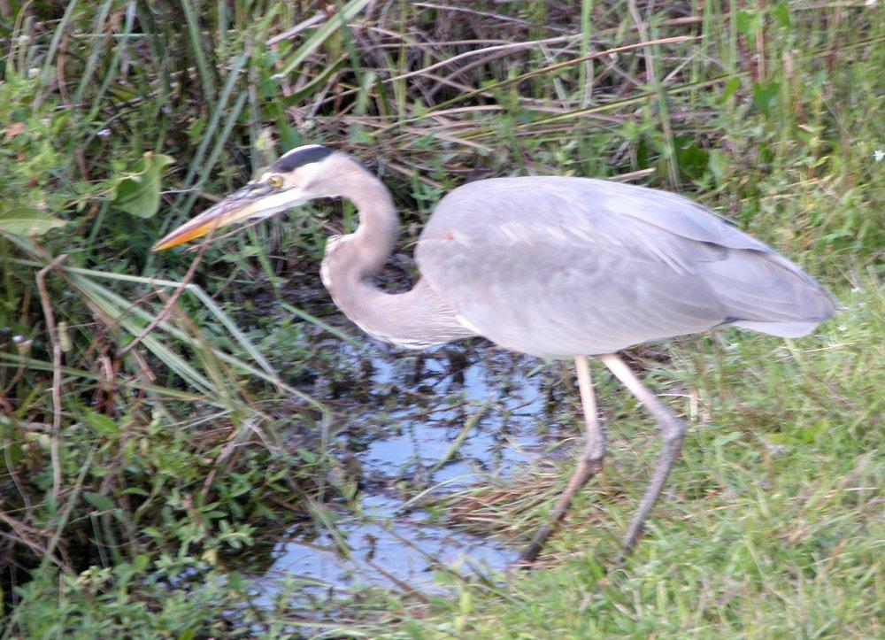 Everglades Nov 2004 144.jpg