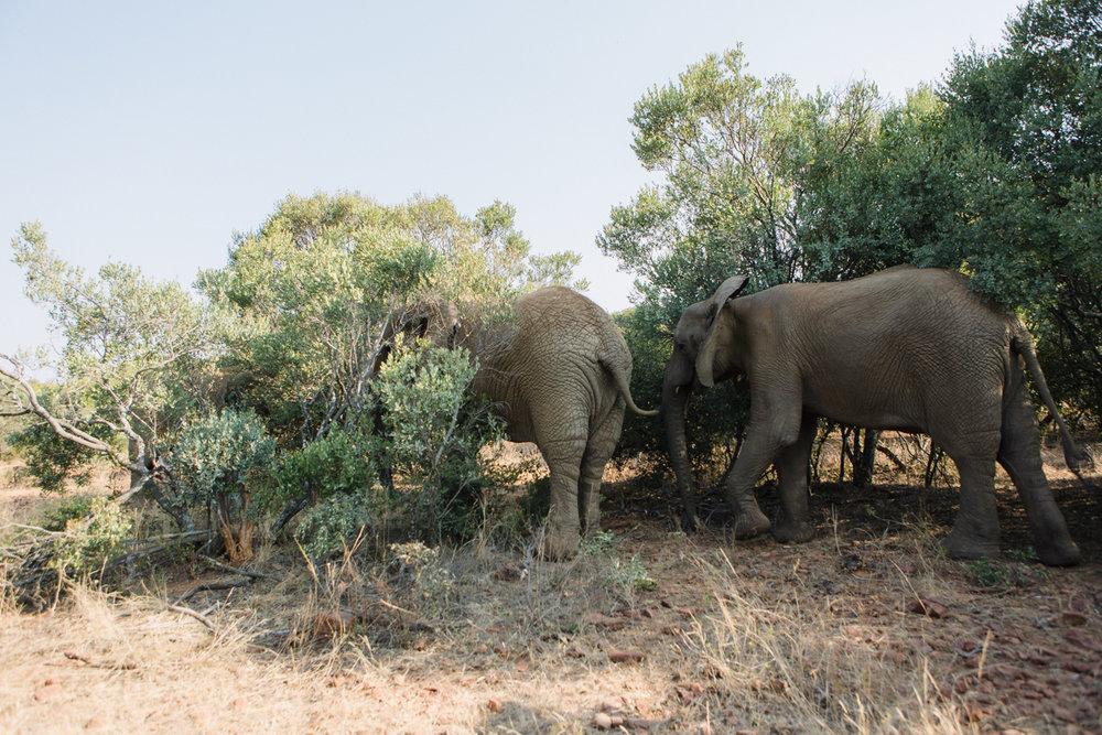 genteelbeasts-dustanddreamsphotography-photography-southafrica-unearthing.tc-37.jpg