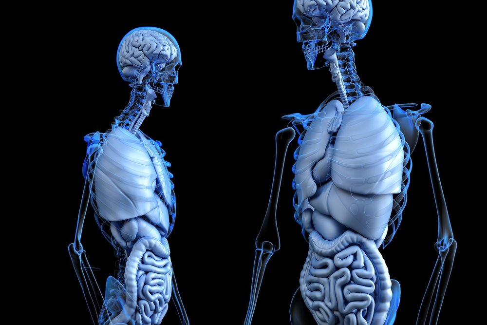 The Brain-Gut Connection -