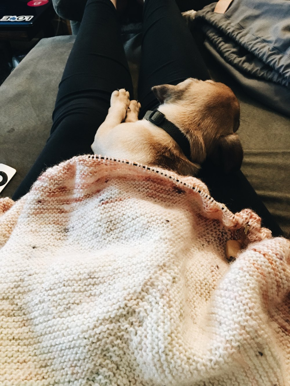 My happy place: Knitting on my What the Fade shawl by Andrea Mowry while my pup Esther sleeps in my lap.