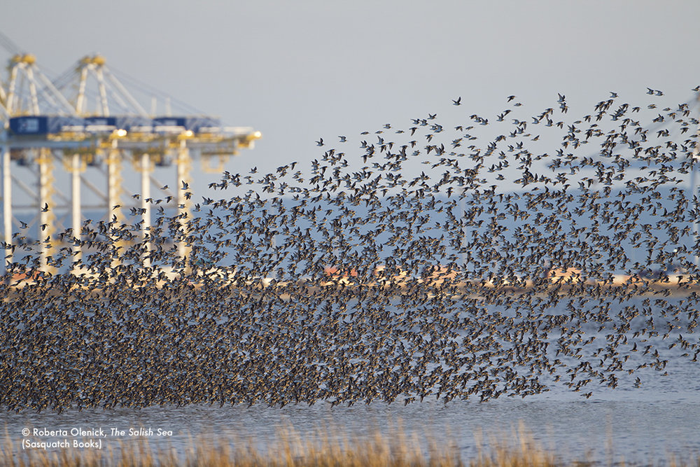 birdsatport.jpg