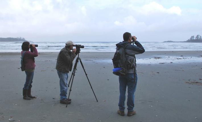 Bird Studies Canada seabird survey