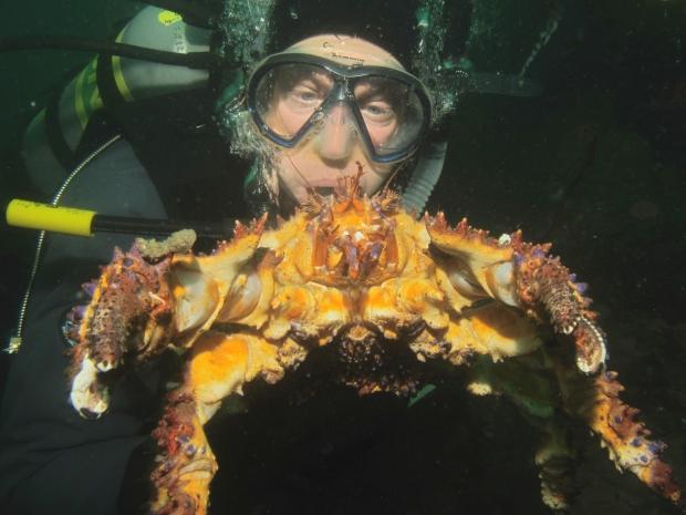 naylor-crab-photo.jpg