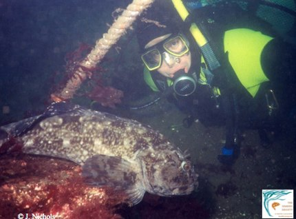 The cabezon is the world's largest sculpin