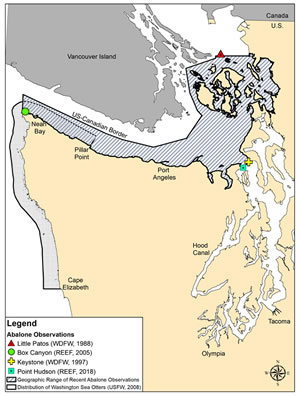 Pinto abalone habitat in Washington (WDFW)