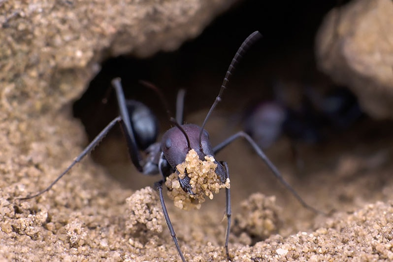 ANTS -
