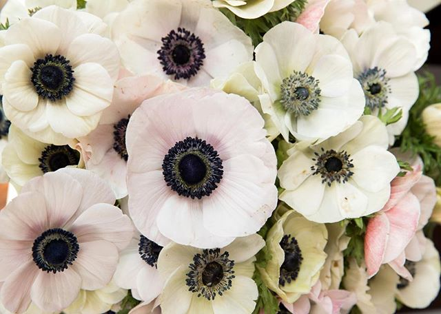 Anemones! One of my favorite flowers. The more you study them the more details you see. So pretty! Start a habit of bringing fresh flowers into your house on a regular basis. It gives life to a space and just makes life more awesome in general. 🌸⠀ .⠀ .⠀ .⠀ photo cred: @andrewsherman⠀ ⠀ #amytyndalldesign #design #designer #interiordesign #interiordesigner #beautiful #wilmingtonnc #ilm #interiors #interiordetails #details #style #homedesign #decor #interiorinspiration #interiorstyle #interiordetails #figure8island #decor #instadecor #interiorinspo #instainterior #styling #interior #interiors123 #laidbackluxury #flowers #freshflowers #anemones⠀