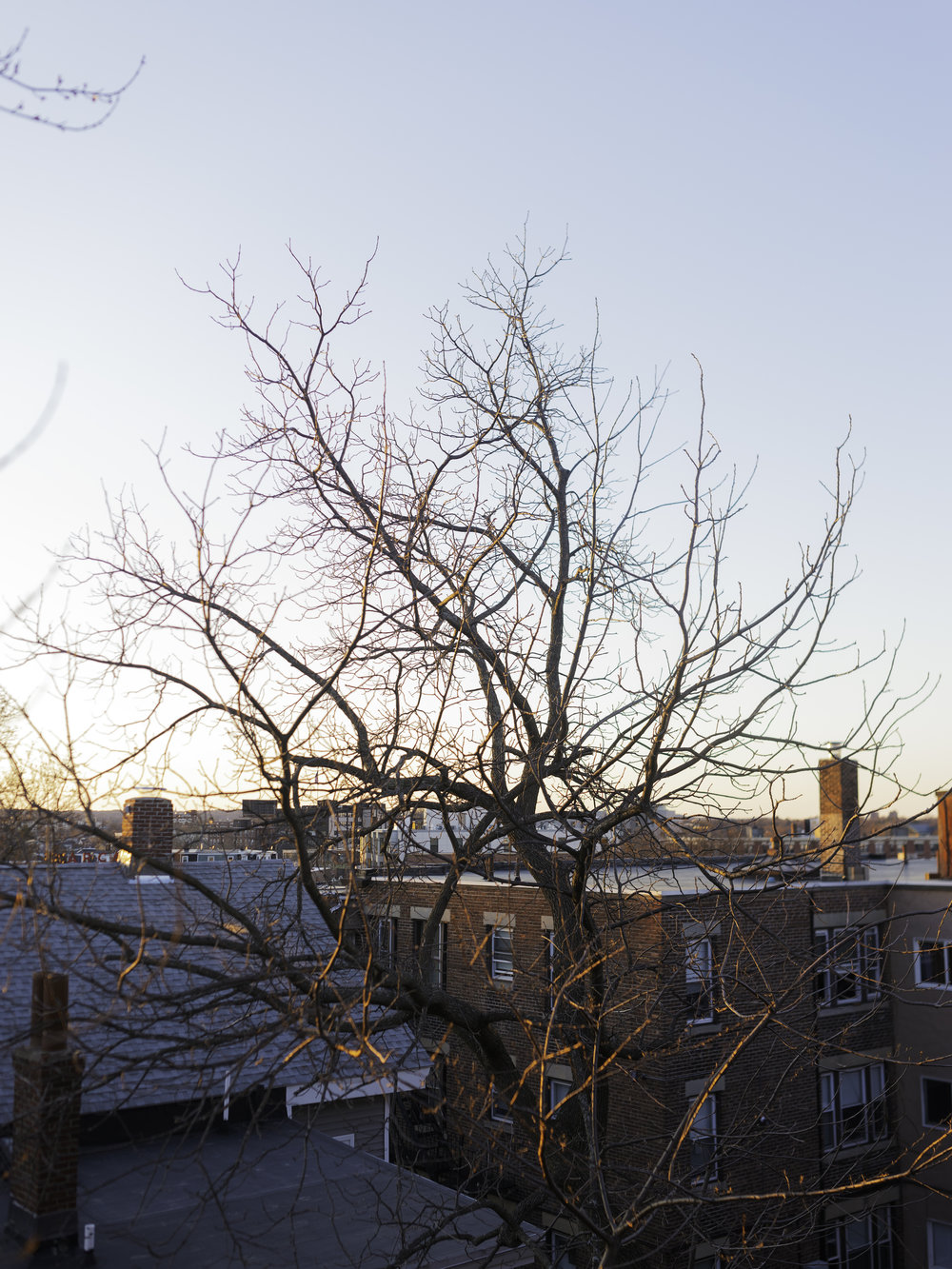 TreeWinter.jpg