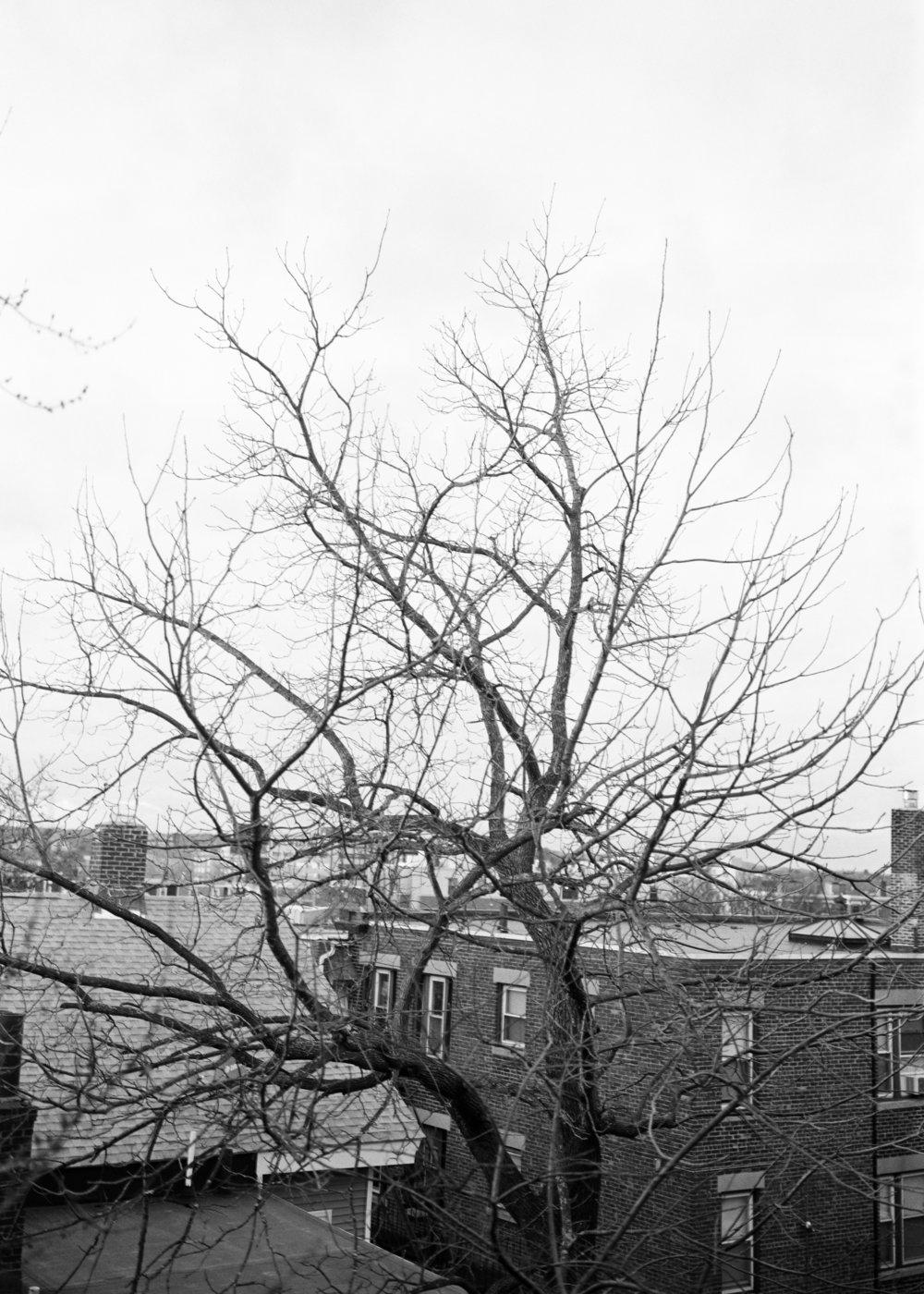 Tree 001.jpg
