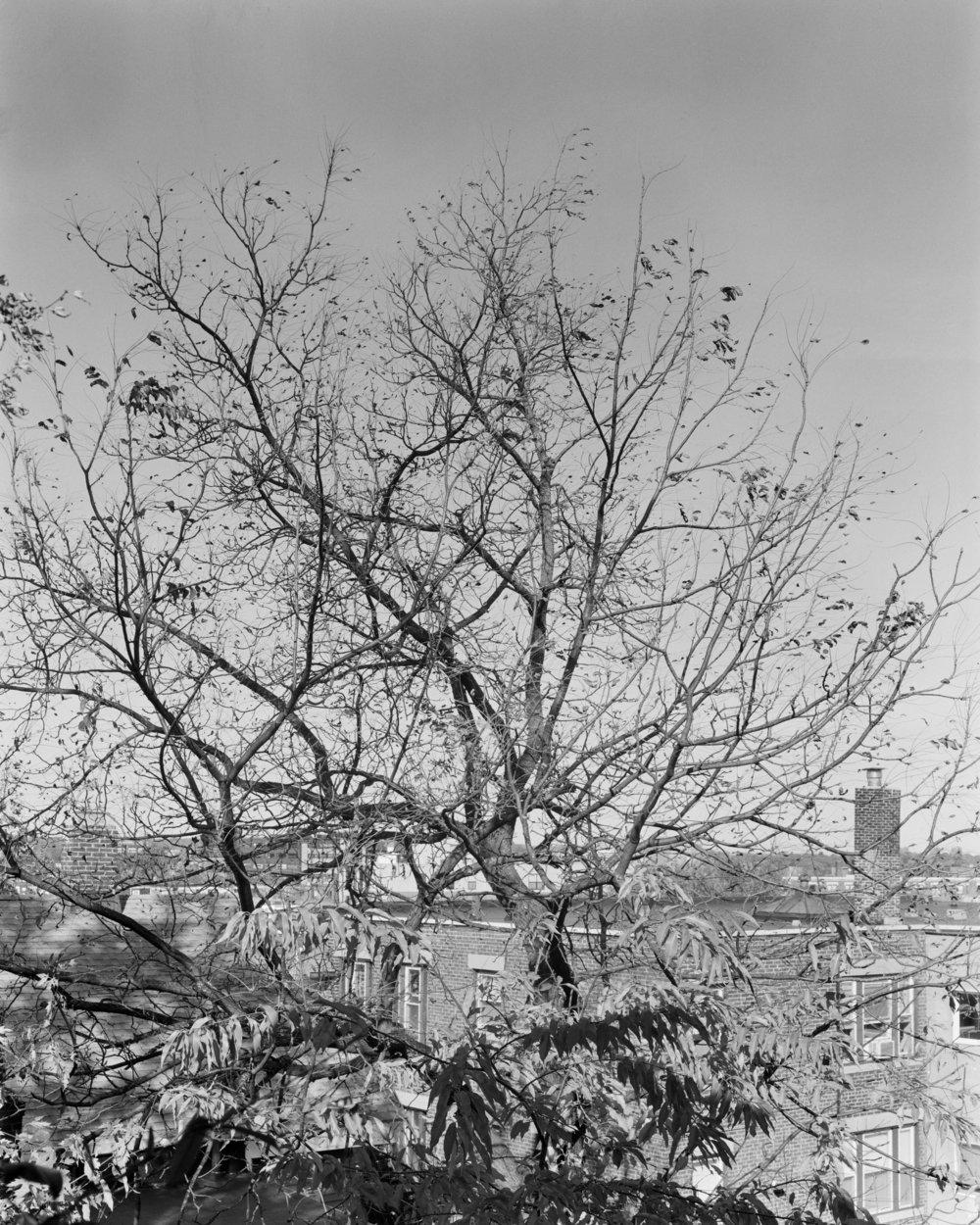 TreeFall 001.jpg