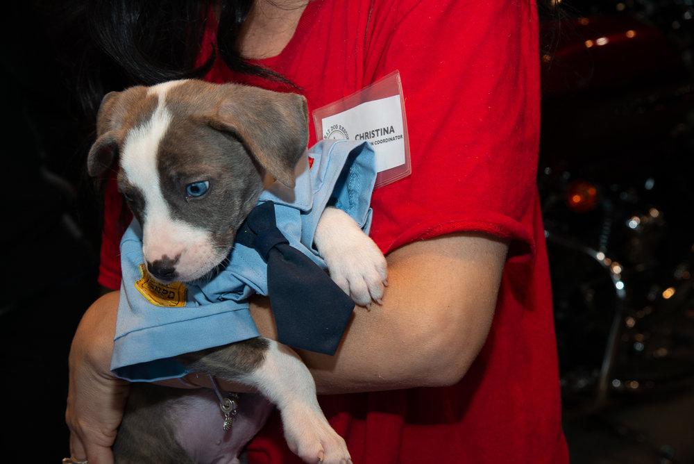 Great Dog Adoption Event