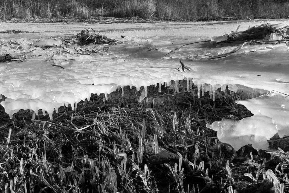 Beach Grass-Coldest Winter