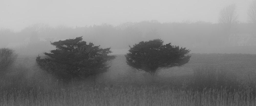 Sea Fog Morning