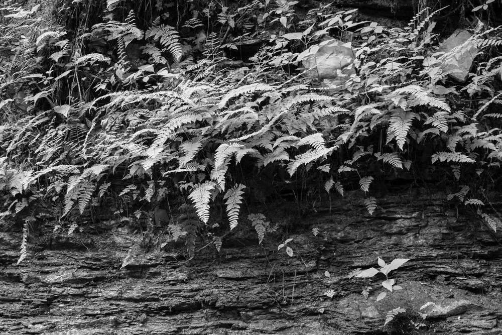 Veil of Ferns