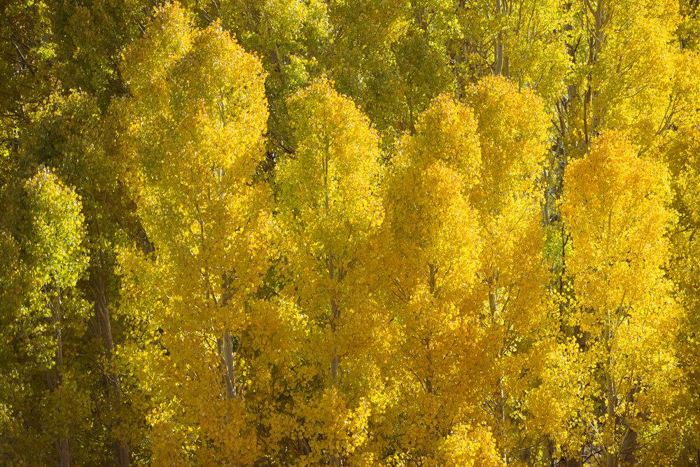 Aspen Cloud, Lee Vining Canyon, Mono Lake
