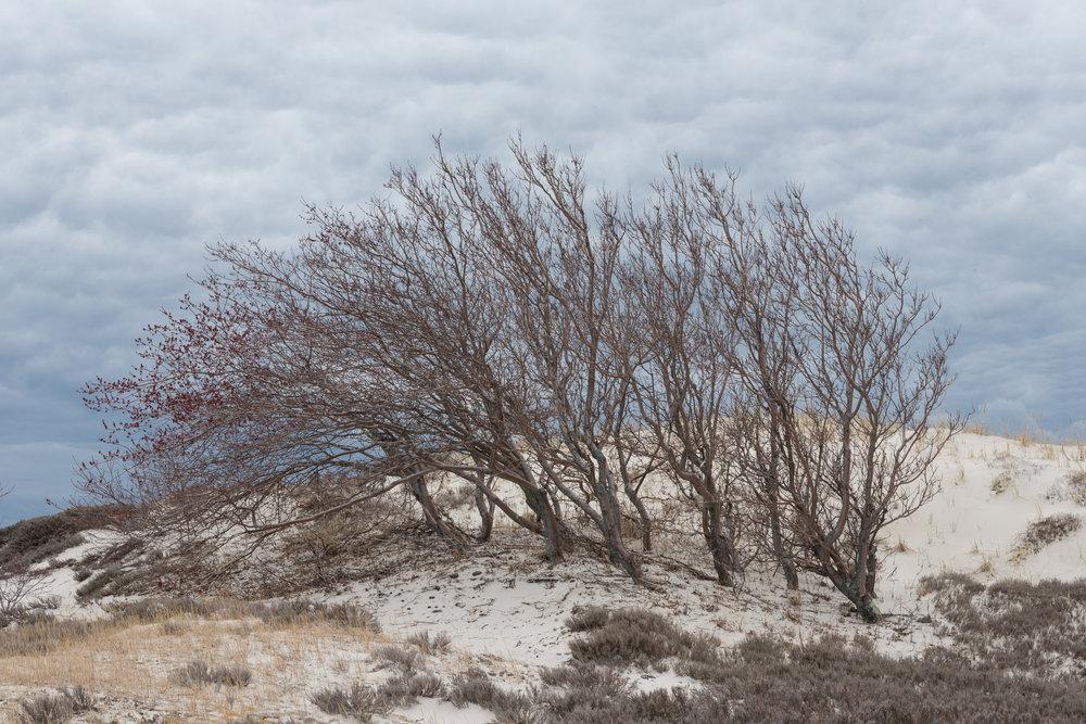 Dune Backside, Crane's Beach