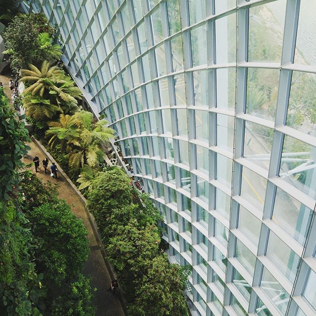 Up high and exploring Singapore's urban jungle 🐅🌿 • Wilkinson Eyre Architects  001