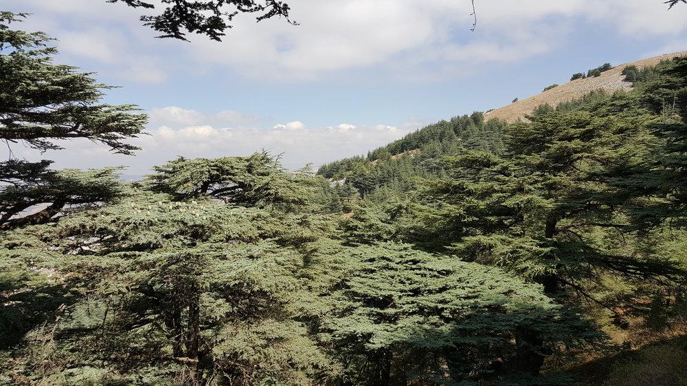 Shouf Biosphere Reserve, lebanon -