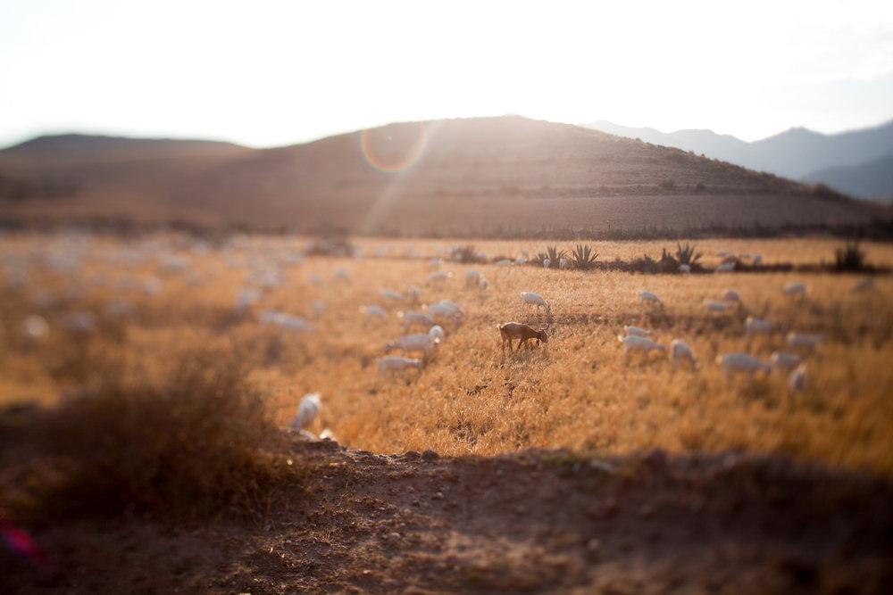026 _MG_0596@ Jimena Roquero Photography@ Jimena Roquero Photography © Jimena Roquero Photography.jpg