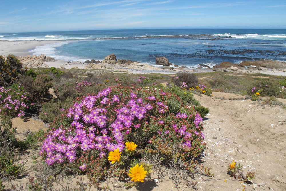 The floral shores of Namaqualand are complemented by bountiful kelp forests beneath the waves (Kerry Sink)