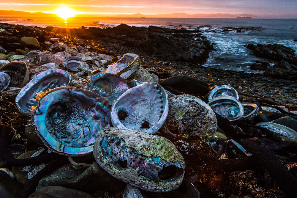 Abalone Recovery