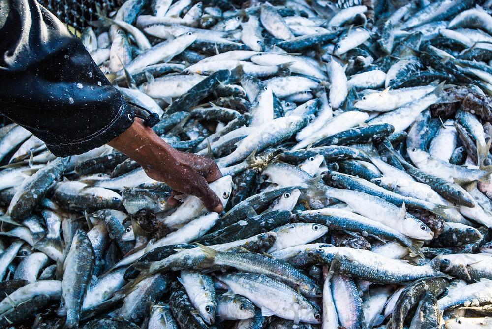006_Fisheries_©PeterChadwick_AfricanConservationPhotographer.jpg