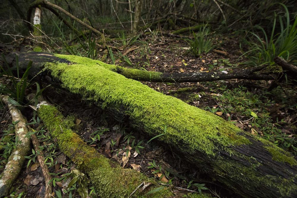 yellowoodtree2_web.jpg