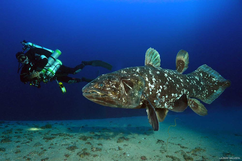 Peter Timm and the Coelacanth