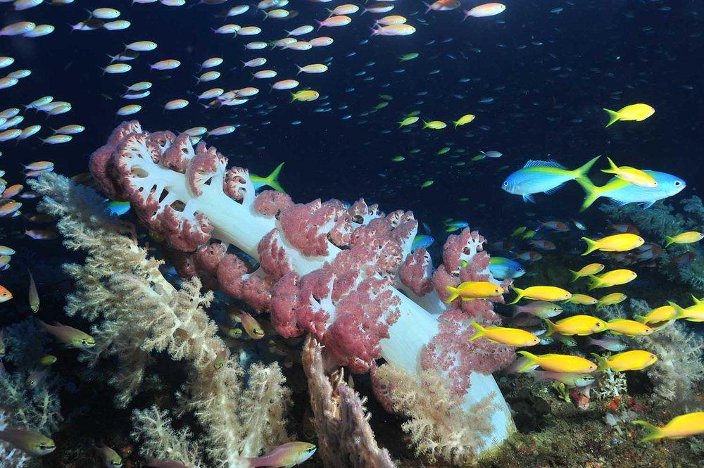 reefs_web3.jpg