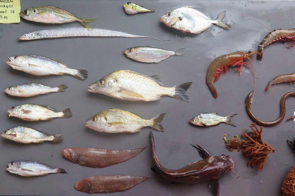 River dependent ecosystem