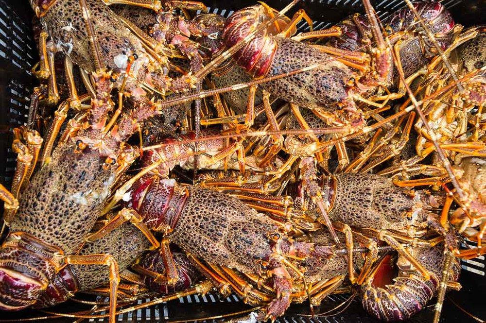 063_Fisheries_©PeterChadwick_AfricanConservationPhotographer.jpg
