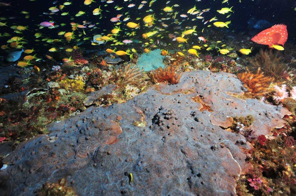 Deep corals
