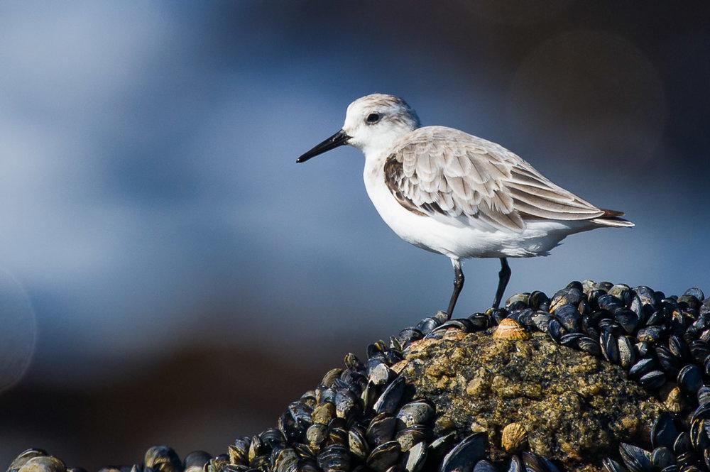 Shorebird Refuge