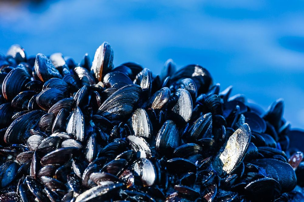 Mussels for Days