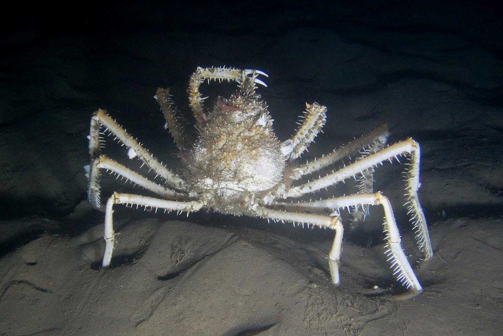 muds_crab_web.jpg