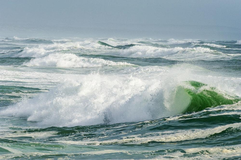 004_West Coast National Park_©PeterChadwick_AfricanConservationPhotographer.jpg