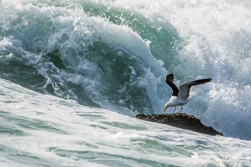 005_West Coast National Park_©PeterChadwick_AfricanConservationPhotographer.jpg