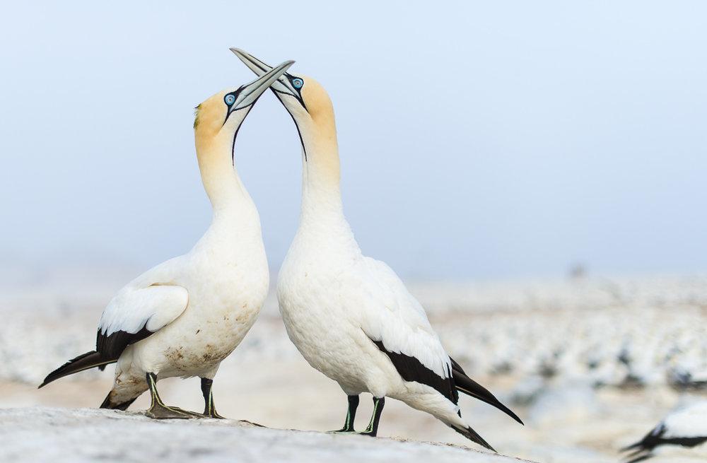 008_West Coast National Park_©PeterChadwick_AfricanConservationPhotographer.jpg
