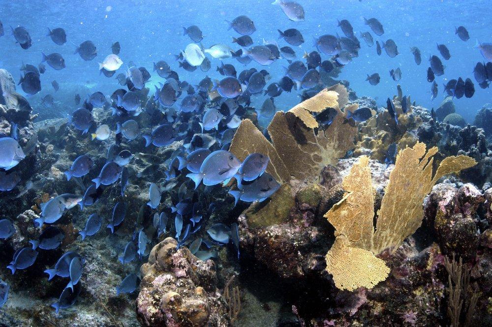 Reef fish are plentiful at Sunset Watch Villa