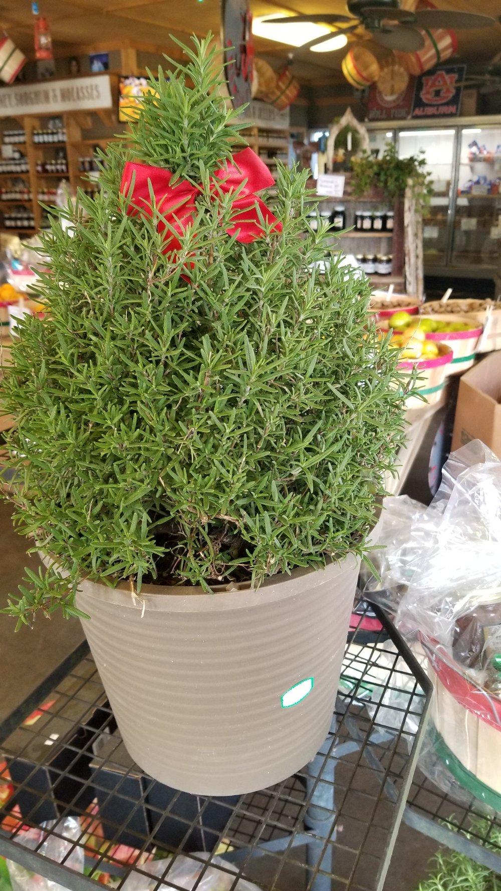 Rosemary - $18