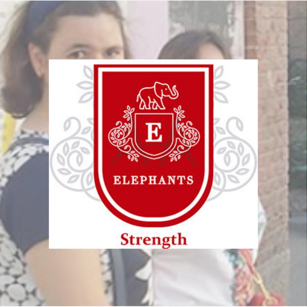 proyecto Elephants prodis.png