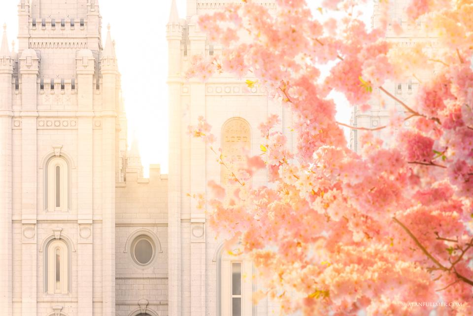 Blossom Glow