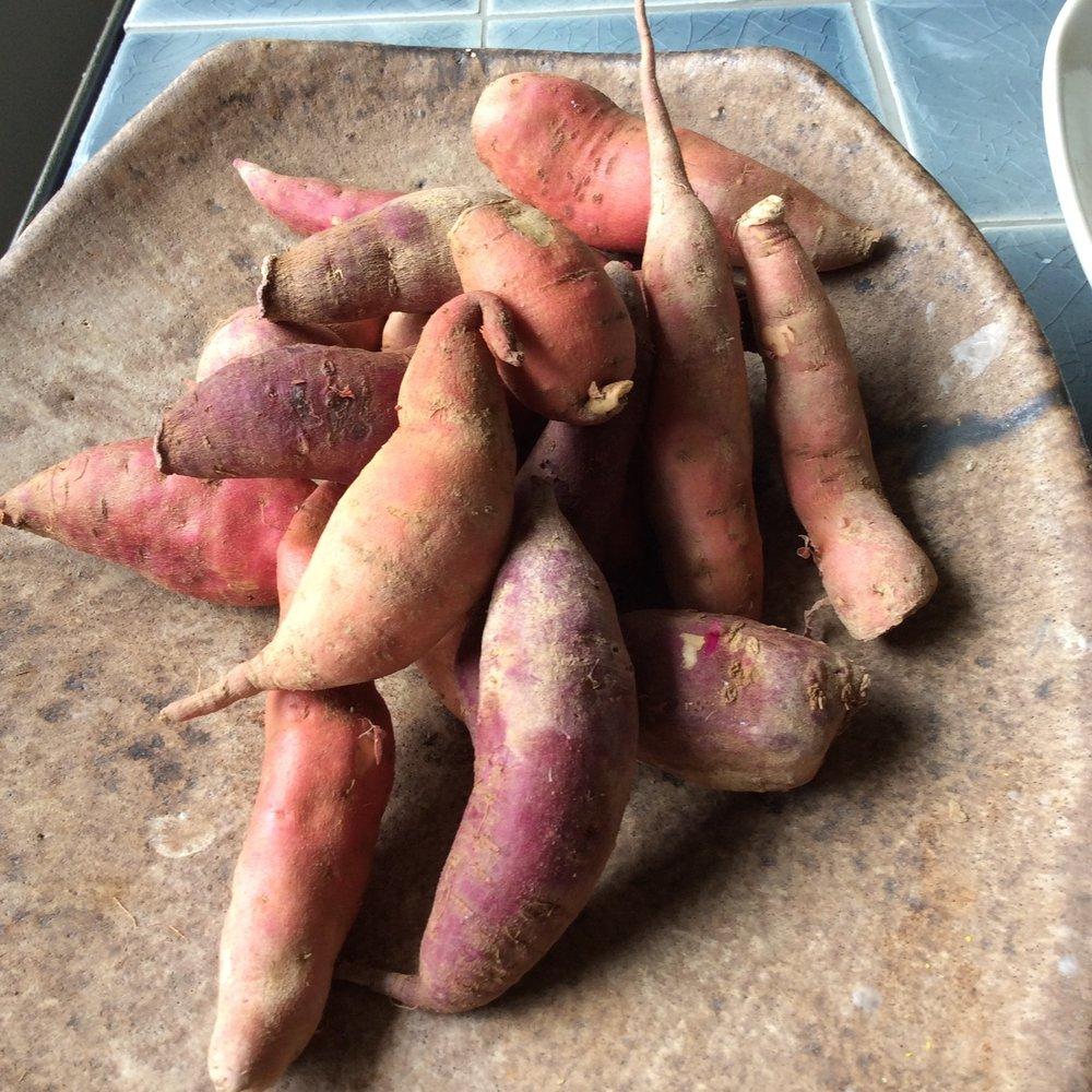 sweet potatoes.jpg