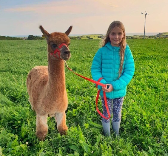 Gift Voucher  - Click below to buy an Alpaca Trekking voucher that is valid for 12 months.