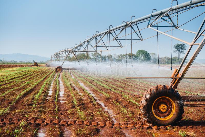 corn watering.jpg