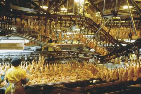 chicken-processing-plant.jpg