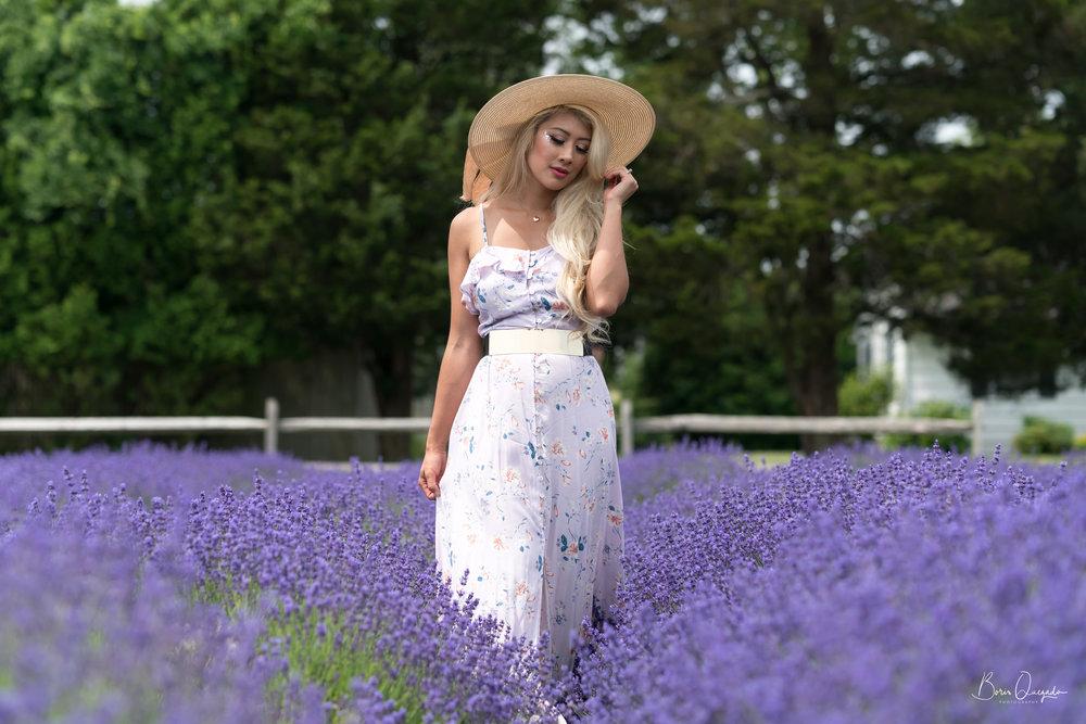 lavenderfields2