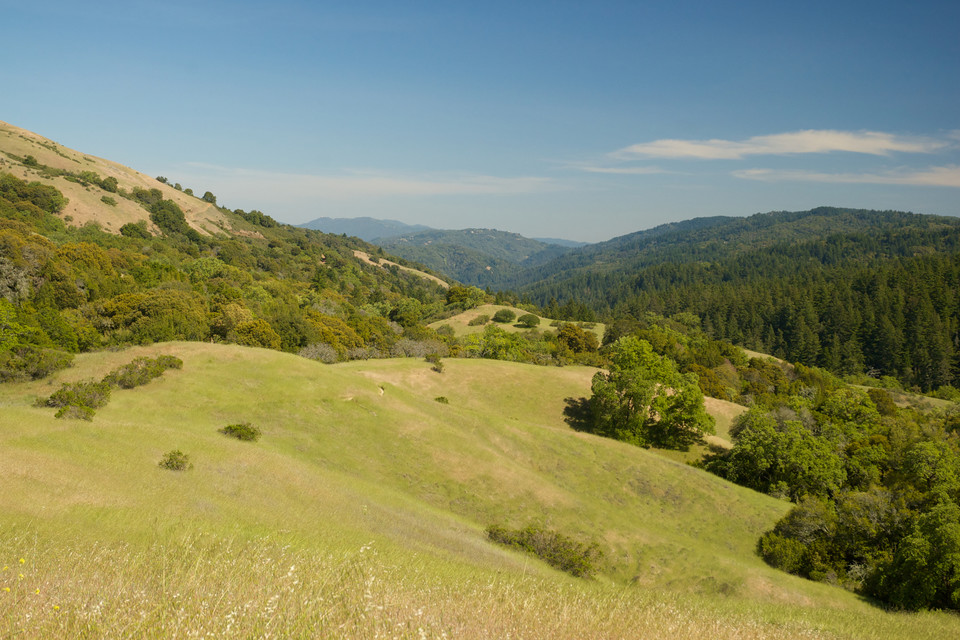Los Altos Hills.jpg