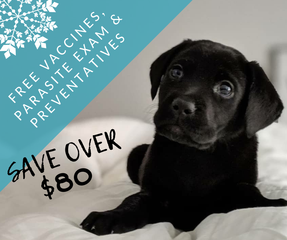 "Did Santa bring your family a new ""furriend""? To ensure your new pets start out on the right paw 🐾, we have a deal you won't believe! If you visit Newberry Animal Hospital before your Puppy or Kitten turns 12 weeks old, it's first Vaccines, parasite exam, deworming and 1st Flea/Tick/Heartworm Preventions are FREE! You'll pay just $45 for a complete Puppy/Kitten Wellness Exam! That's a savings of OVER $80! Call or book online before this offer runs out!"